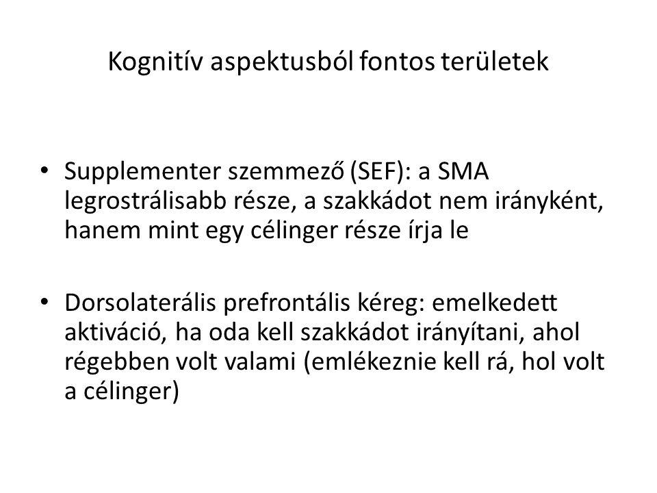 Kognitív aspektusból fontos területek Supplementer szemmező (SEF): a SMA legrostrálisabb része, a szakkádot nem irányként, hanem mint egy célinger rés