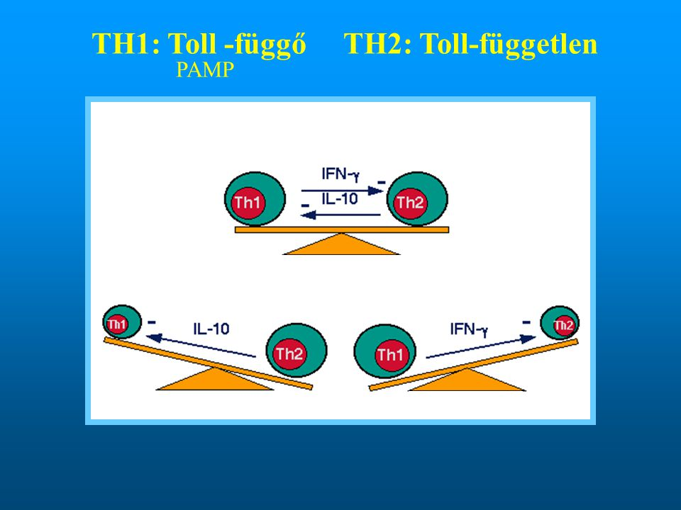 TH1: Toll -függőTH2: Toll-független PAMP