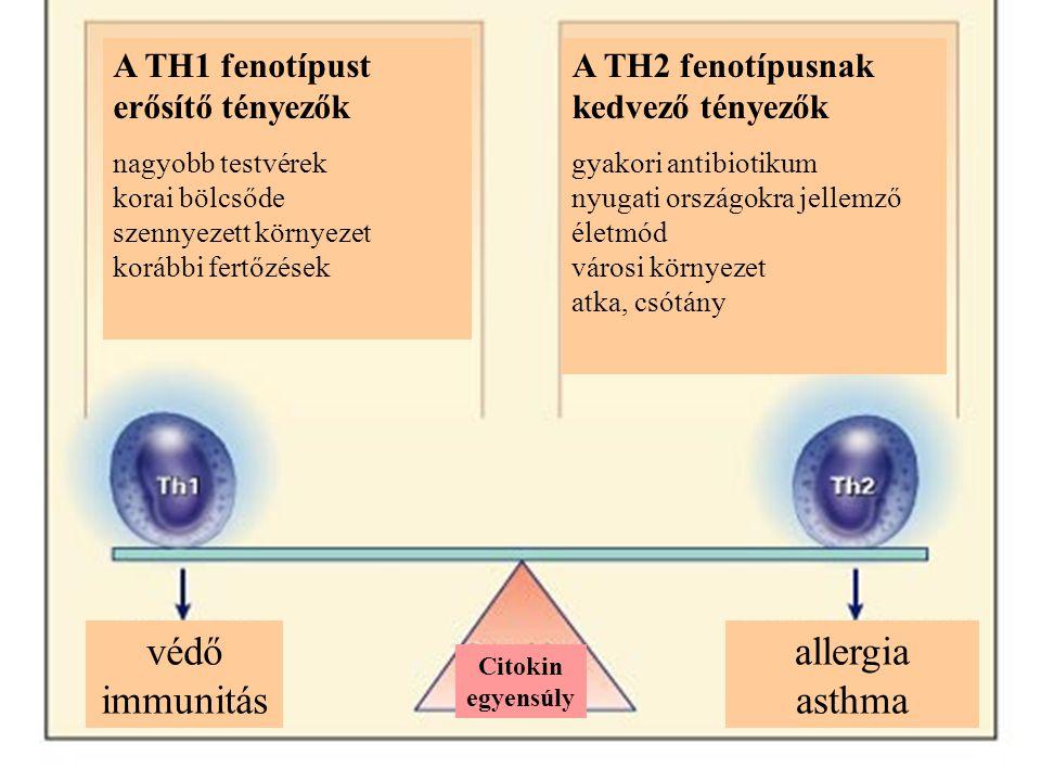 A TH1 fenotípust erősítő tényezők nagyobb testvérek korai bölcsőde szennyezett környezet korábbi fertőzések A TH2 fenotípusnak kedvező tényezők gyakori antibiotikum nyugati országokra jellemző életmód városi környezet atka, csótány védő immunitás allergia asthma Citokin egyensúly