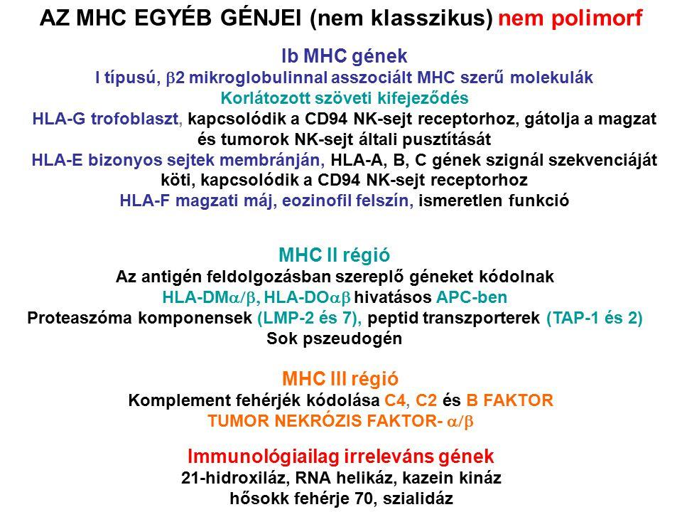 AZ MHC EGYÉB GÉNJEI (nem klasszikus) nem polimorf Ib MHC gének I típusú,  2 mikroglobulinnal asszociált MHC szerű molekulák Korlátozott szöveti kifej