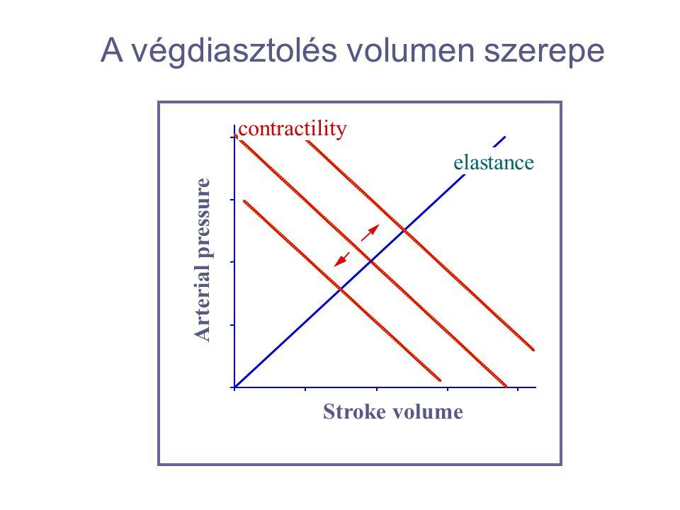 contractility elastance Stroke volume Arterial pressure A végdiasztolés volumen szerepe