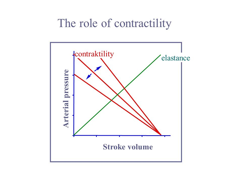 The role of contractility contraktility elastance Stroke volume Arterial pressure