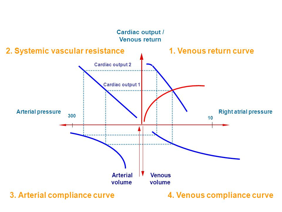 Cardiac output / Venous return Right atrial pressureArterial pressure Arterial volume Venous volume 2. Systemic vascular resistance Cardiac output 1 3