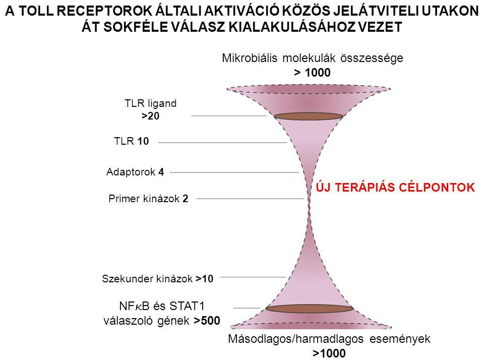 A TOLL RECEPTOROK ÁLTALI AKTIVÁCIÓ KÖZÖS JELÁTVITELI UTAKON ÁT SOKFÉLE VÁLASZ KIALAKULÁSÁHOZ VEZET Mikrobiális molekulák összessége > 1000 TLR ligand >20 TLR 10 Adaptorok 4 Primer kinázok 2 Szekunder kinázok >10 NF  B és STAT1 válaszoló gének >500 Másodlagos/harmadlagos események >1000 ÚJ TERÁPIÁS CÉLPONTOK