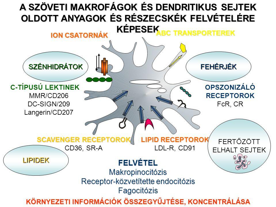 A SZÖVETI MAKROFÁGOK ÉS DENDRITIKUS SEJTEK OLDOTT ANYAGOK ÉS RÉSZECSKÉK FELVÉTELÉRE KÉPESEK C-TÍPUSÚ LEKTINEK MMR/CD206 DC-SIGN/209 Langerin/CD207 SZÉNHIDRÁTOK SCAVENGER RECEPTOROK CD36, SR-A LIPID RECEPTOROK LDL-R, CD91 LIPIDEK OPSZONIZÁLÓ RECEPTOROK FcR, CR FEHÉRJÉK FERTŐZÖTT ELHALT SEJTEK FELVÉTELMakropinocitózis Receptor-közvetítette endocitózis Fagocitózis KÖRNYEZETI INFORMÁCIÓK ÖSSZEGYŰJTÉSE, KONCENTRÁLÁSA ION CSATORNÁK ABC TRANSPORTEREK