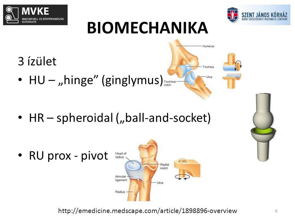 BIOMECHANIKA 7 http://groupd1022.blogspot.hu/2012/08/anatomy-workshop-week-3-elbow-and.html