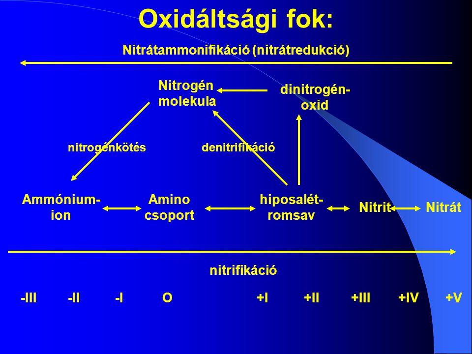 Oxidáltsági fok: Nitrátammonifikáció (nitrátredukció) Nitrogén molekula dinitrogén- oxid nitrogénkötésdenitrifikáció Ammónium- ion Amino csoport hiposalét- romsav NitritNitrát nitrifikáció -III-II-IO+I+II+III+IV+V