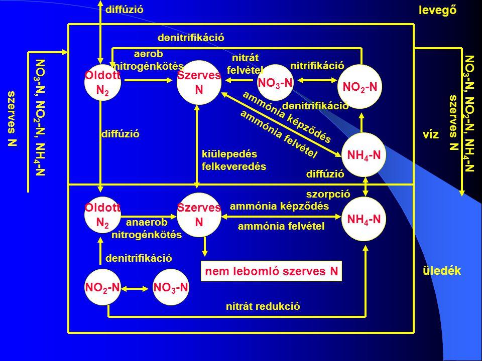 Oldott N 2 Szerves N NO 3 -N Oldott N 2 NO 2 -NNO 3 -N NO 2 -N NH 4 -N Szerves N nem lebomló szerves N víz üledék NO 3 -N, NO 2 -N, NH 4 -N szerves N NO 3 -N, NO 2 -N, NH 4 -N szerves N diffúzió kiülepedés felkeveredés diffúzió szorpció ammónia képződés ammónia felvétel anaerob nitrogénkötés denitrifikáció nitrát redukció diffúzió denitrifikáció ammónia képződés ammónia felvétel levegő aerob nitrogénkötés nitrát felvétel nitrifikáció denitrifikáció