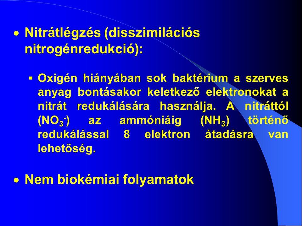  Nitrátlégzés (disszimilációs nitrogénredukció):  Oxigén hiányában sok baktérium a szerves anyag bontásakor keletkező elektronokat a nitrát redukálására használja.