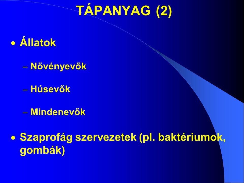 TÁPANYAG (2)  Állatok – Növényevők – Húsevők – Mindenevők  Szaprofág szervezetek (pl.