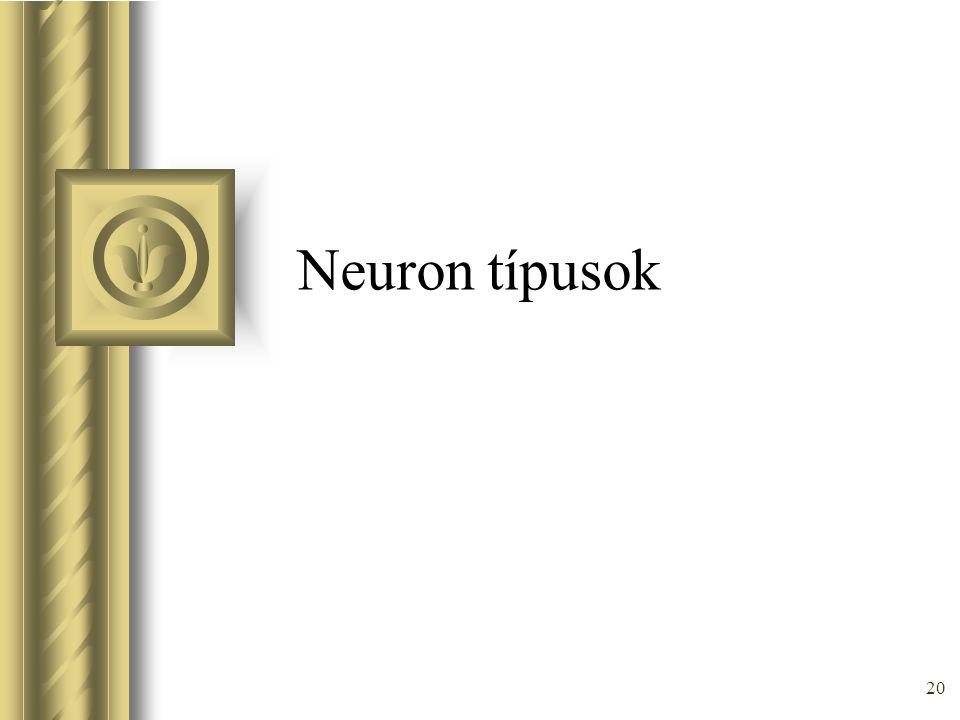 20 Neuron típusok