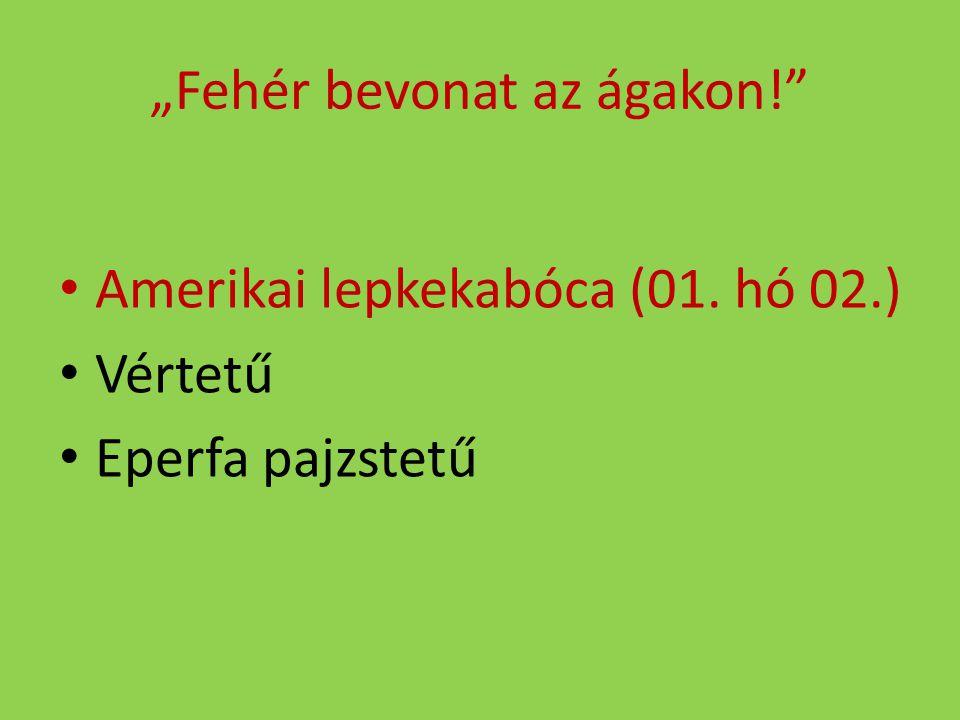 """""""Fehér bevonat az ágakon!"""" Amerikai lepkekabóca (01. hó 02.) Vértetű Eperfa pajzstetű"""
