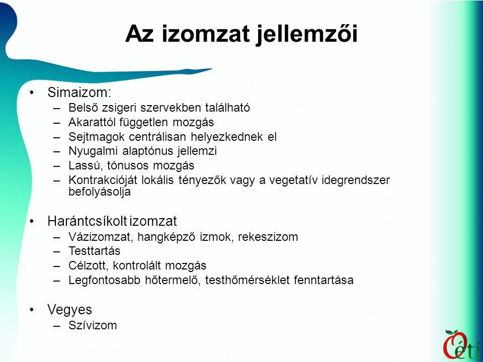 Az izomzat jellemzői Simaizom: –Belső zsigeri szervekben található –Akarattól független mozgás –Sejtmagok centrálisan helyezkednek el –Nyugalmi alaptó
