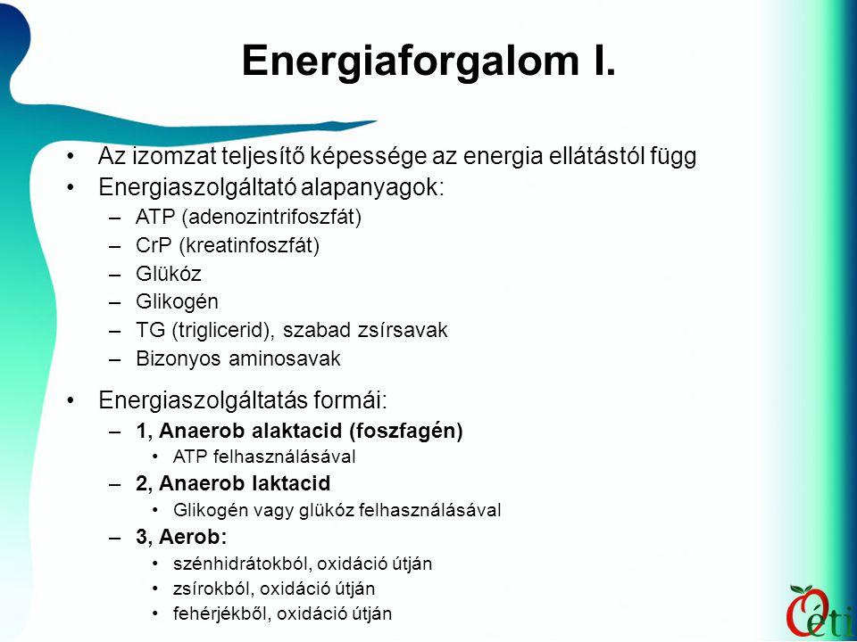 Energiaforgalom I. Az izomzat teljesítő képessége az energia ellátástól függ Energiaszolgáltató alapanyagok: –ATP (adenozintrifoszfát) –CrP (kreatinfo