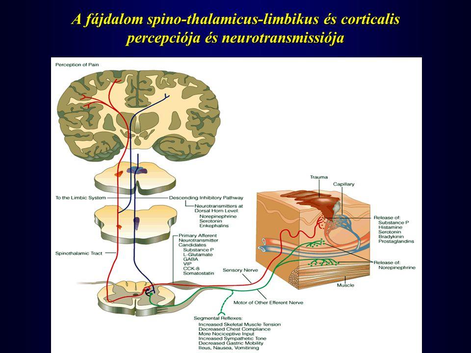 A n.ilioinquinalis a n.intercostalis és a n.femoralis infiltrációja