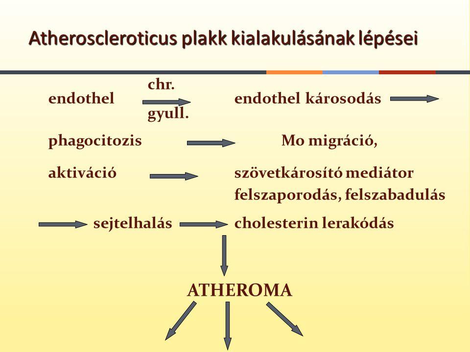 chr. endothel endothel károsodás gyull. phagocitozisMo migráció, aktivációszövetkárosító mediátor felszaporodás, felszabadulás sejtelhalás cholesterin