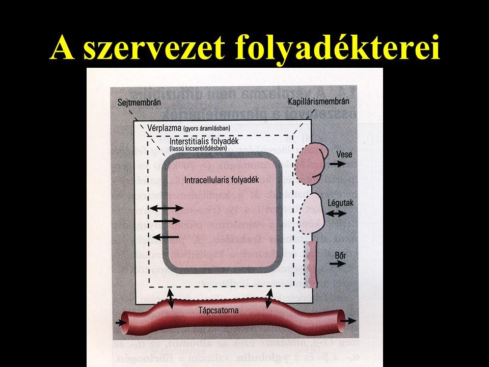 A szervezet folyadékterei