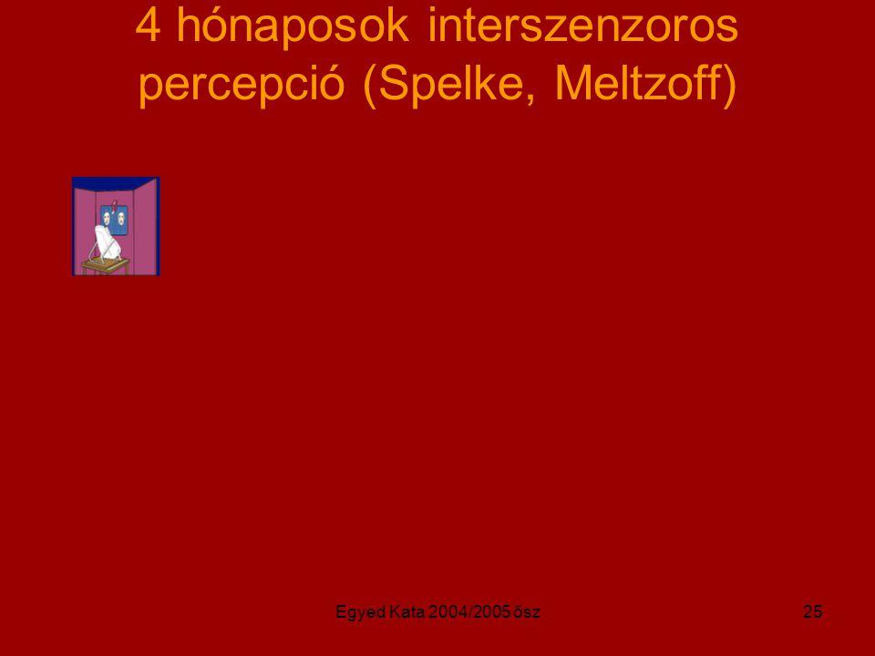 Egyed Kata 2004/2005 ősz25 4 hónaposok interszenzoros percepció (Spelke, Meltzoff)