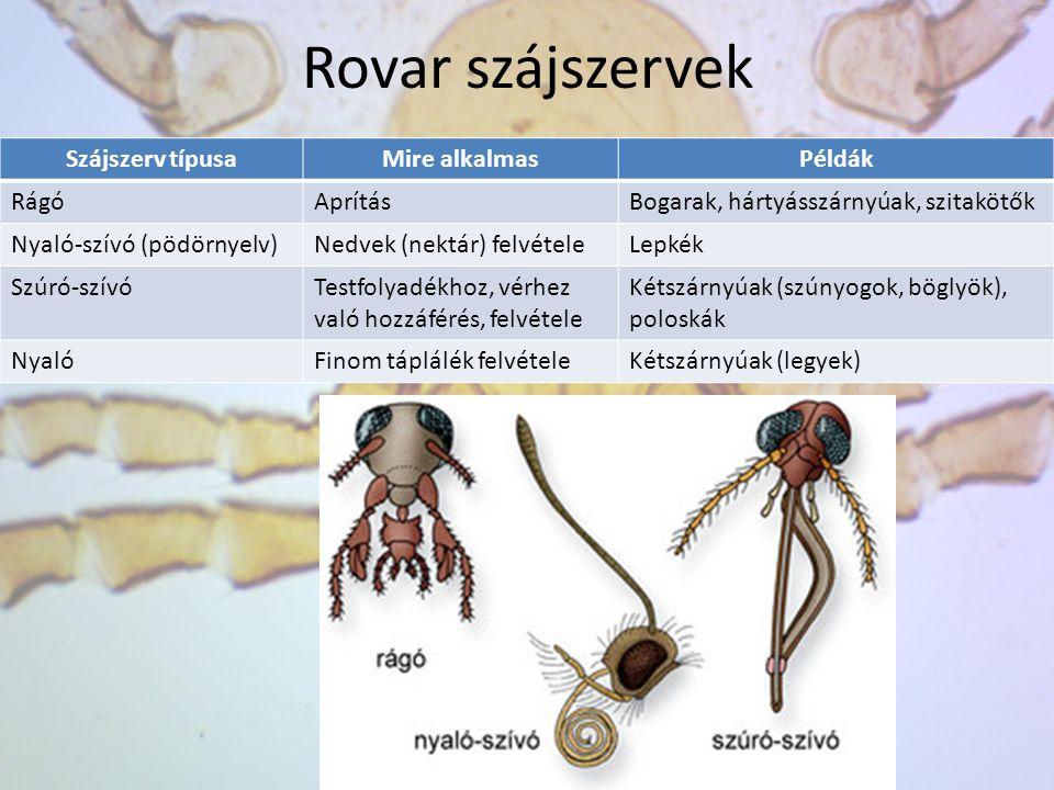 Rovar szájszervek Szájszerv típusaMire alkalmasPéldák RágóAprításBogarak, hártyásszárnyúak, szitakötők Nyaló-szívó (pödörnyelv)Nedvek (nektár) felvéte
