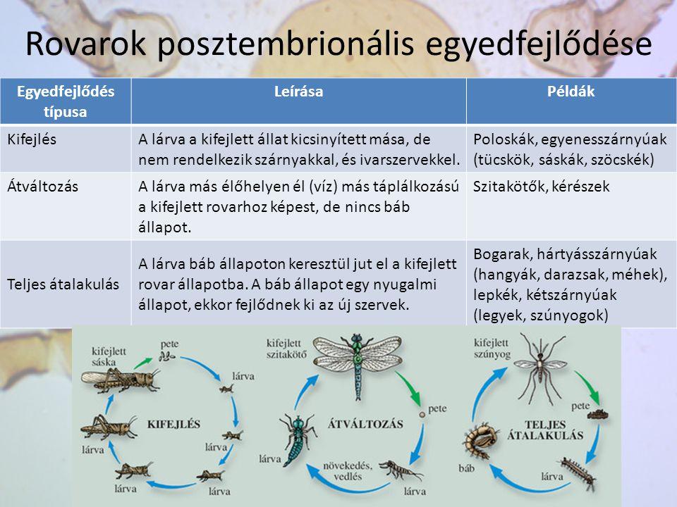 Rovarok posztembrionális egyedfejlődése Egyedfejlődés típusa LeírásaPéldák KifejlésA lárva a kifejlett állat kicsinyített mása, de nem rendelkezik szá