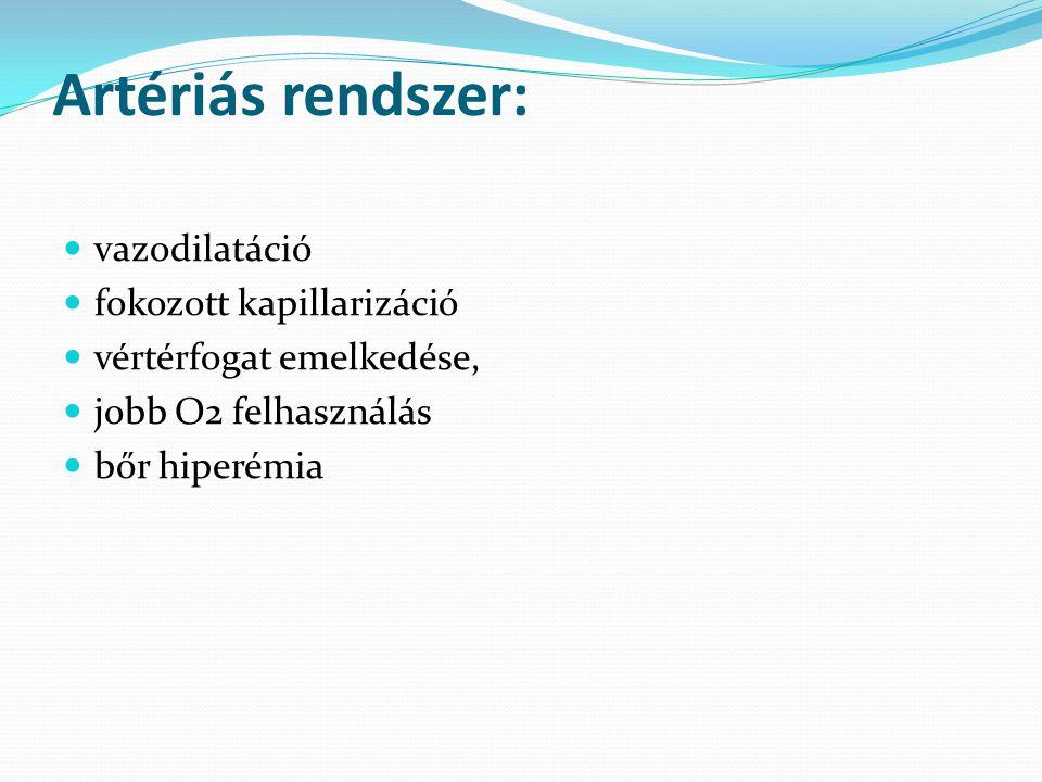 Artériás rendszer: vazodilatáció fokozott kapillarizáció vértérfogat emelkedése, jobb O2 felhasználás bőr hiperémia