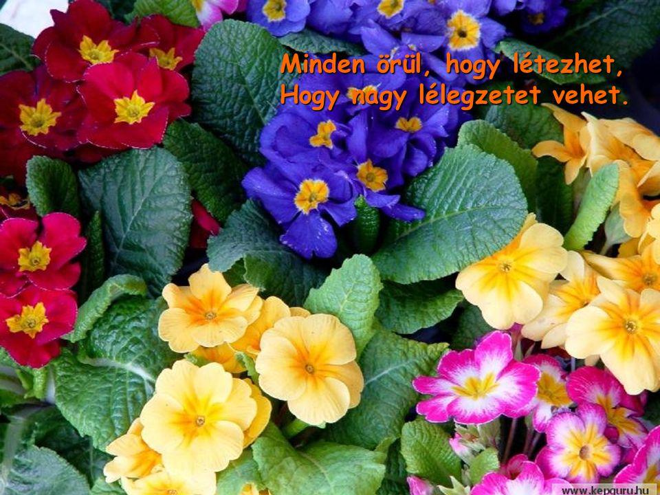 Ez a húsvét olyan ünnep, Sírás és bánat, elülnek.