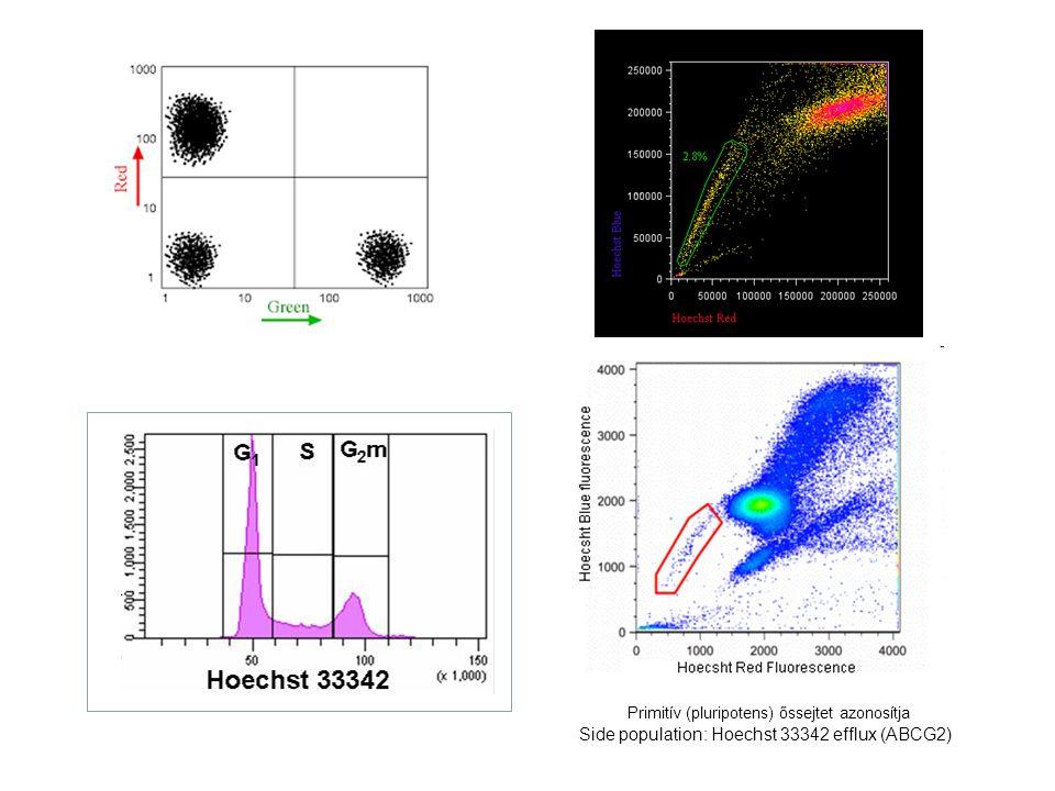 Side population: Hoechst 33342 efflux (ABCG2) Primitív (pluripotens) őssejtet azonosítja