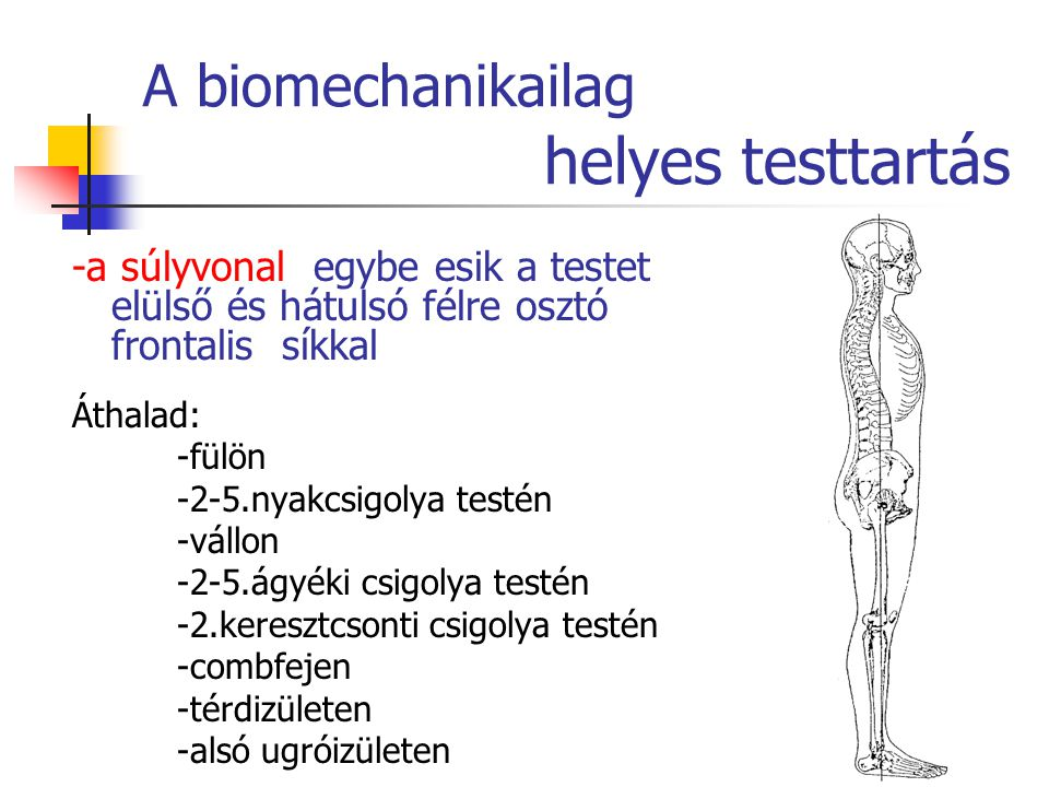A biomechanikailag helyes testtartás -a súlyvonal egybe esik a testet elülső és hátulsó félre osztó frontalis síkkal Áthalad: -fülön -2-5.nyakcsigolya testén -vállon -2-5.ágyéki csigolya testén -2.keresztcsonti csigolya testén -combfejen -térdizületen -alsó ugróizületen