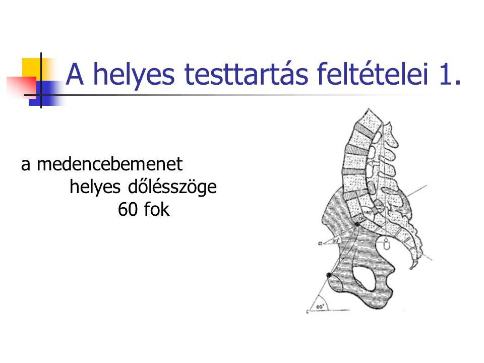 A helyes testtartás feltételei 1. a medencebemenet helyes dőlésszöge 60 fok