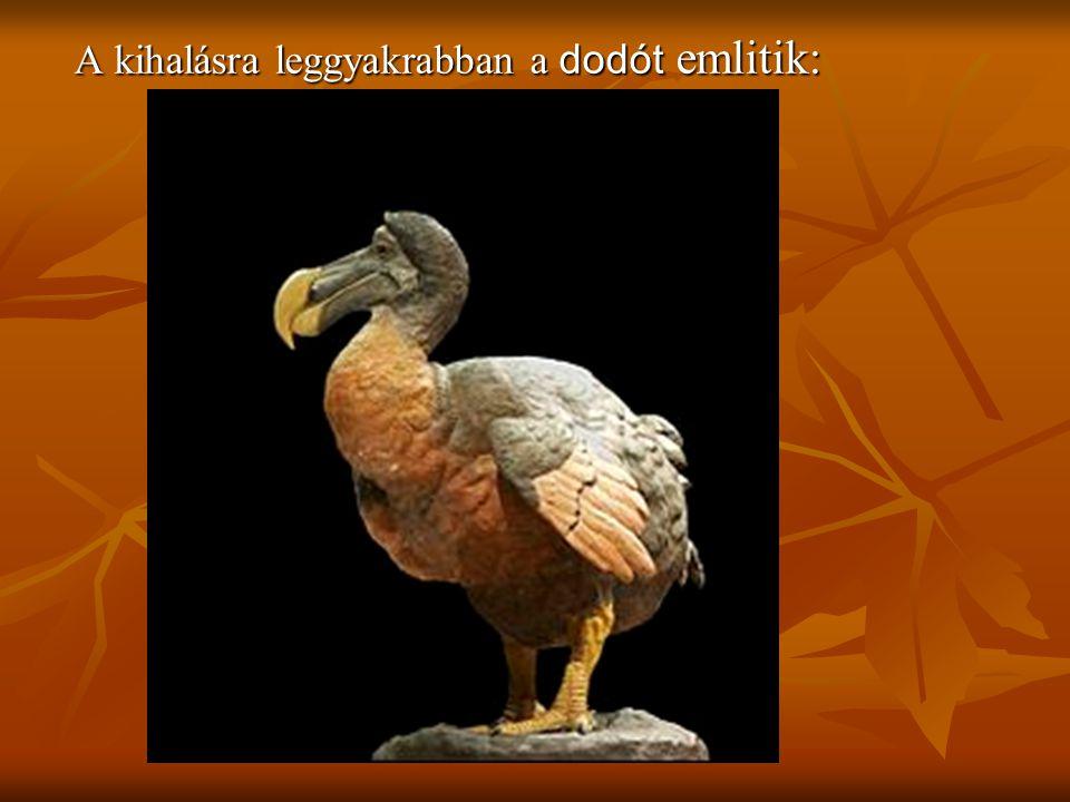 A kihalásra leggyakrabban a dodót emlitik: