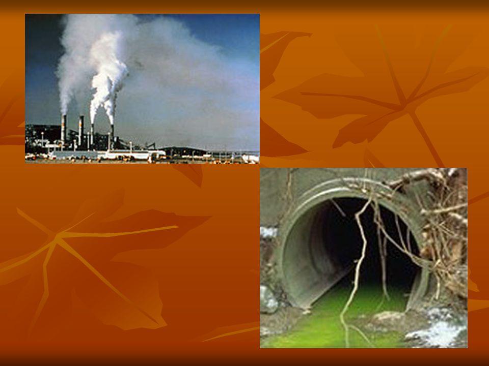 Levegőszennyezés A kipufogógázok miatt a levegő nitrogén-dioxid tartalma az ideális 0,000002%-os tartalom felett van.