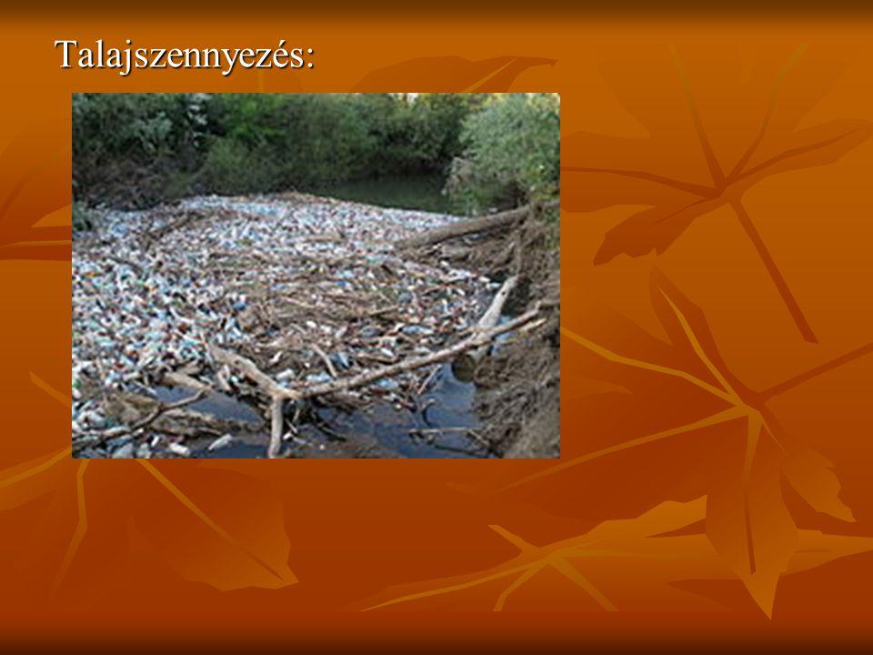 A környezetszennyezés egészségi hatásai A környezetszennyezés hatása az embereknél különféle betegségek megjelenését okozhatja.