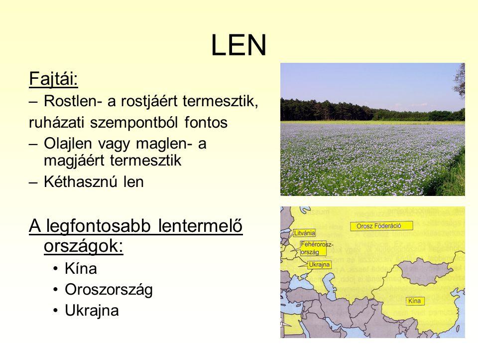 LEN Fajtái: –Rostlen- a rostjáért termesztik, ruházati szempontból fontos –Olajlen vagy maglen- a magjáért termesztik –Kéthasznú len A legfontosabb le