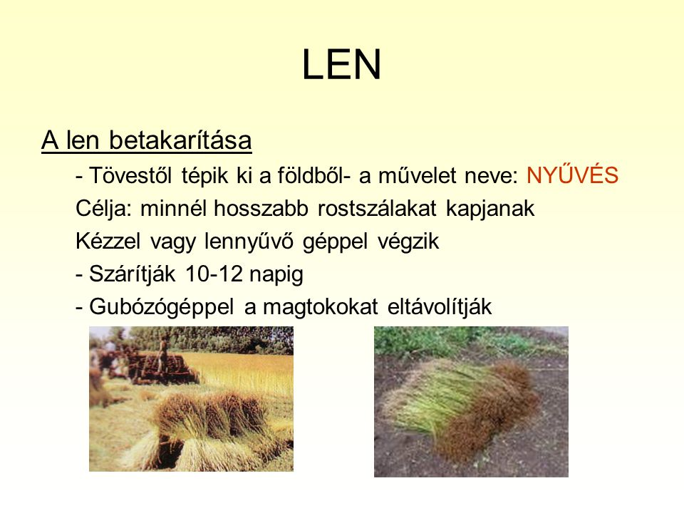 LEN Len elsődleges megmunkálása : Válogatás- érettség, hossz, szín, vastagság, tisztaság Rostfeltárás Műveletek célja: rostok elválasztása az egyéb növényi részektől Feltárás módjai: 1.