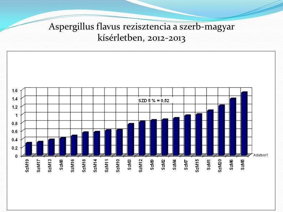 Sárga nélkül: r=0.7156, P=0.001 MKK 2013 kísérlet, összefüggések a fertőzöttség és toxintartalom között, 2013