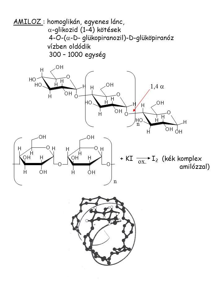 O H H H OH HOH H OH O O H H H OH HOH H OH O + KI I 2 (kék komplex amilózzal) ox. n AMILOZ : homoglikán, egyenes lánc,  -glikozid (1-4) kötések 4-O-(