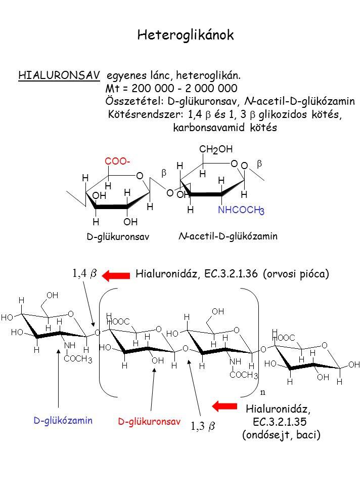 HIALURONSAV egyenes lánc, heteroglikán. Mt = 200 000 - 2 000 000 Összetétel: D-glükuronsav, N-acetil-D-glükózamin Kötésrendszer: 1,4  és 1, 3  gliko