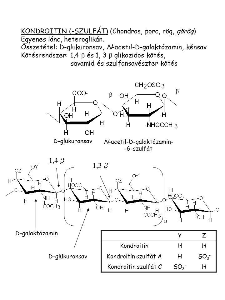KONDROITIN (-SZULFÁT) (Chondros, porc, rög, görög) Egyenes lánc, heteroglikán. Összetétel: D-glükuronsav, N-acetil-D-galaktózamin, kénsav Kötésrendsze
