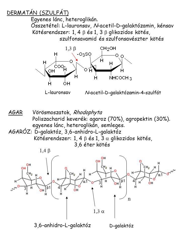 AGAR Vörösmoszatok, Rhodophyta Poliszacharid keverék: agaroz (70%), agropektin (30%). egyenes lánc, heteroglikán, semleges. AGARÓZ: D-galaktóz, 3,6-an