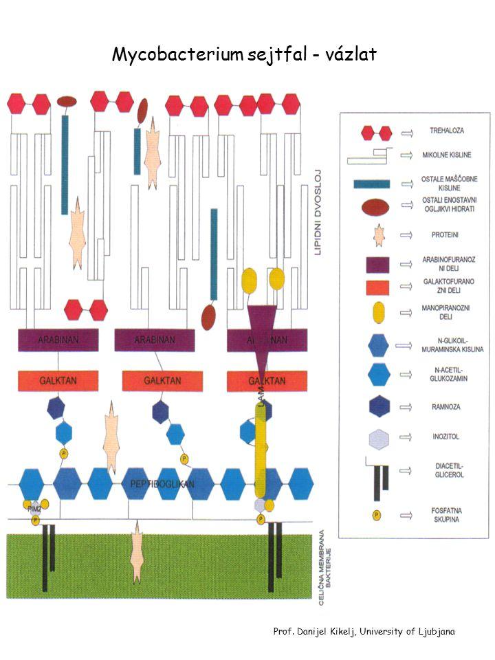 Mycobacterium sejtfal - vázlat Prof. Danijel Kikelj, University of Ljubjana