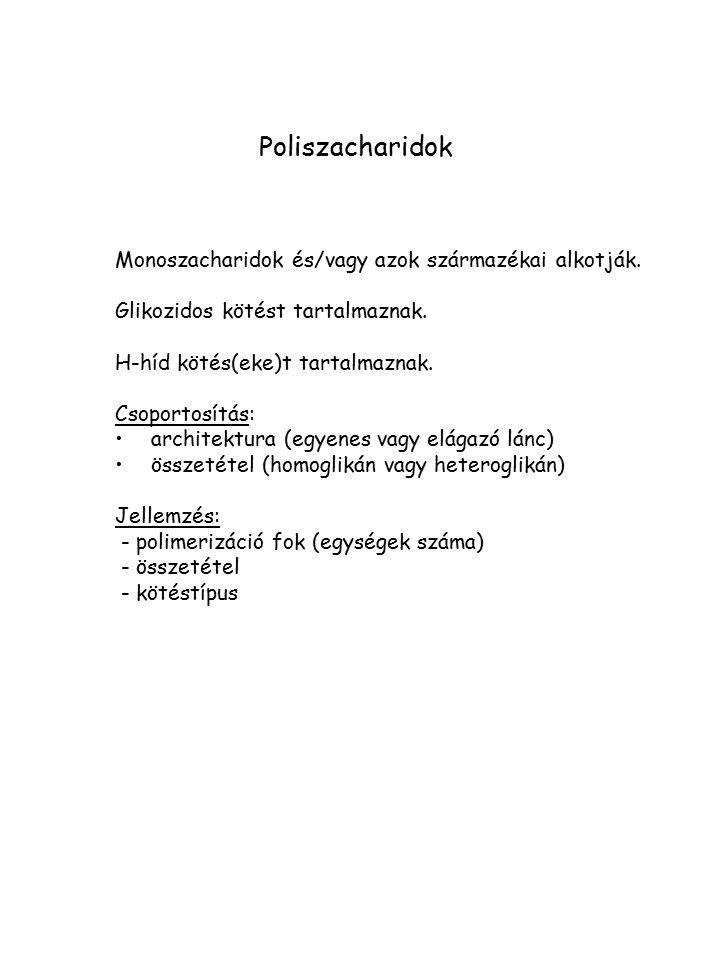 Poliszacharidok Monoszacharidok és/vagy azok származékai alkotják. Glikozidos kötést tartalmaznak. H-híd kötés(eke)t tartalmaznak. Csoportosítás: arch