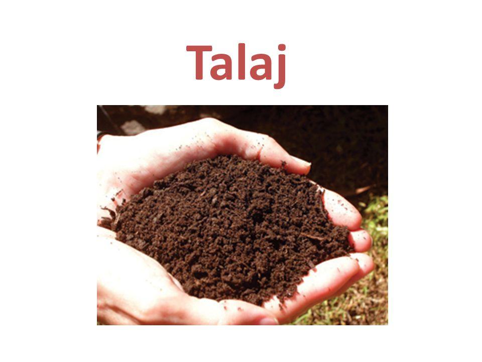 Földkéreg legfelső, laza termékeny rétege Növények, talajlakó állatok élőhelye