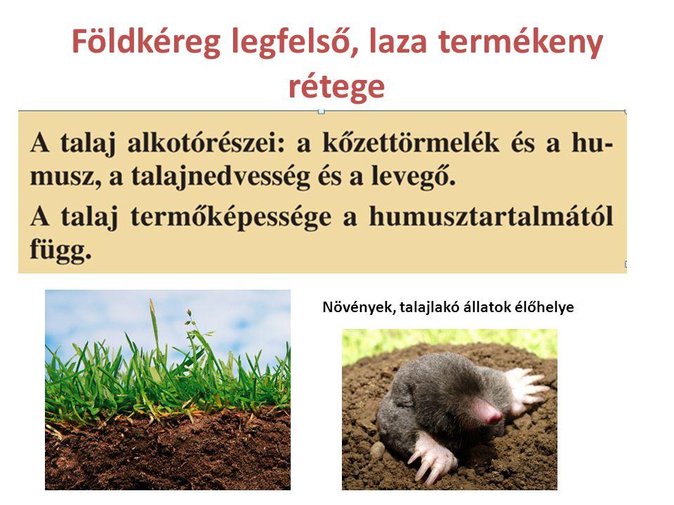 Kőzettörmelék aprózódással, mállással jön létre A humusz elpusztult növényi és állati maradványok.