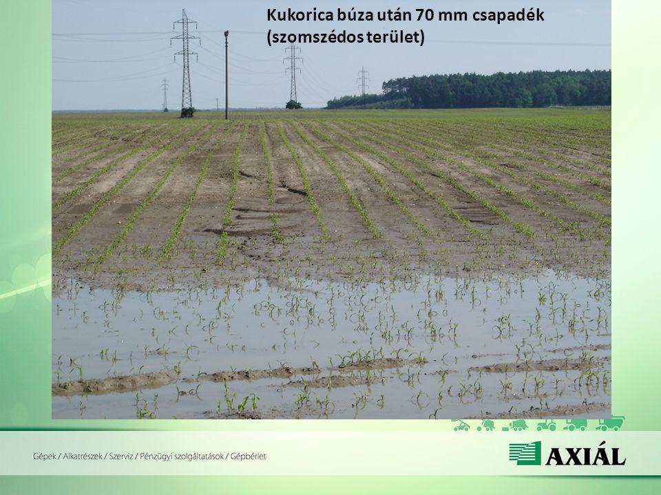 Kukorica búza után 70 mm csapadék (szomszédos terület)