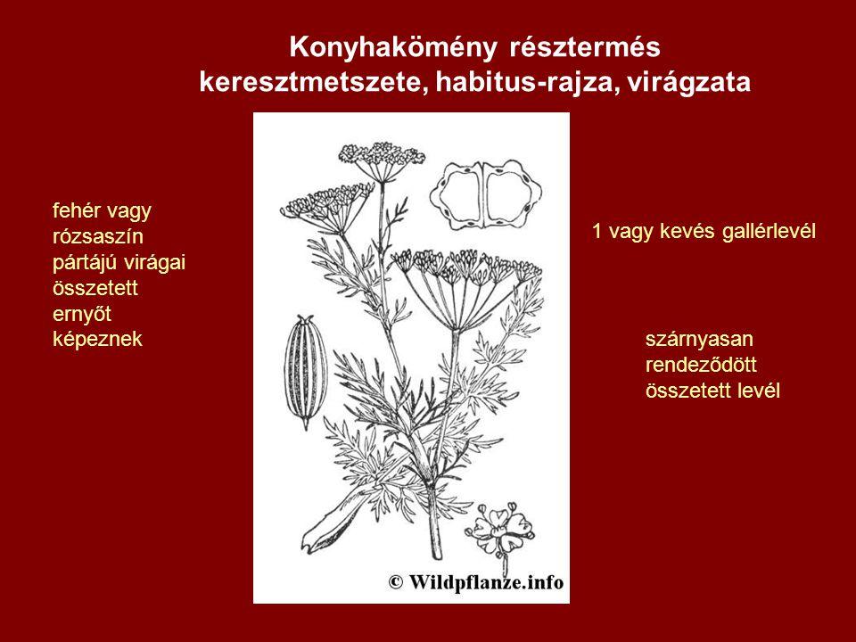 1 vagy kevés gallérlevél fehér vagy rózsaszín pártájú virágai összetett ernyőt képeznek szárnyasan rendeződött összetett levél Konyhakömény résztermés keresztmetszete, habitus-rajza, virágzata