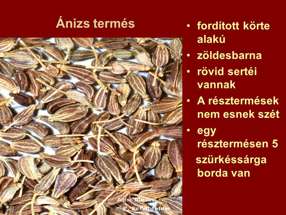 Ánizs termés fordított körte alakú zöldesbarna rövid sertéi vannak A résztermések nem esnek szét egy résztermésen 5 szürkéssárga borda van