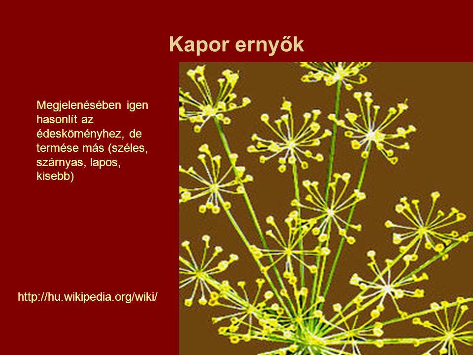 Kapor ernyők http://hu.wikipedia.org/wiki/ Megjelenésében igen hasonlít az édesköményhez, de termése más (széles, szárnyas, lapos, kisebb)