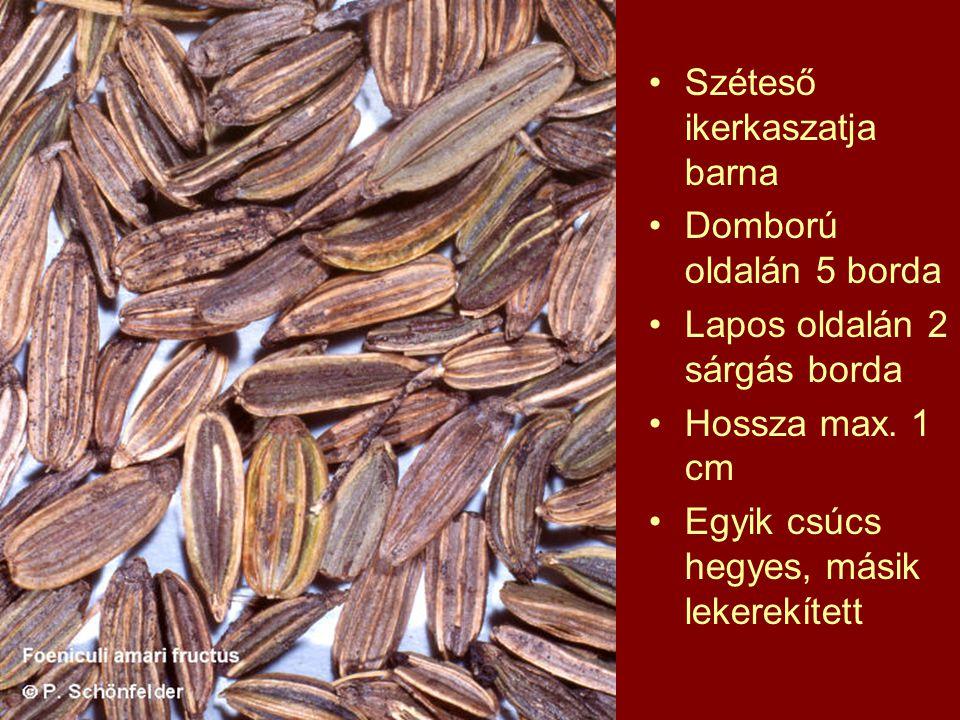 Széteső ikerkaszatja barna Domború oldalán 5 borda Lapos oldalán 2 sárgás borda Hossza max.