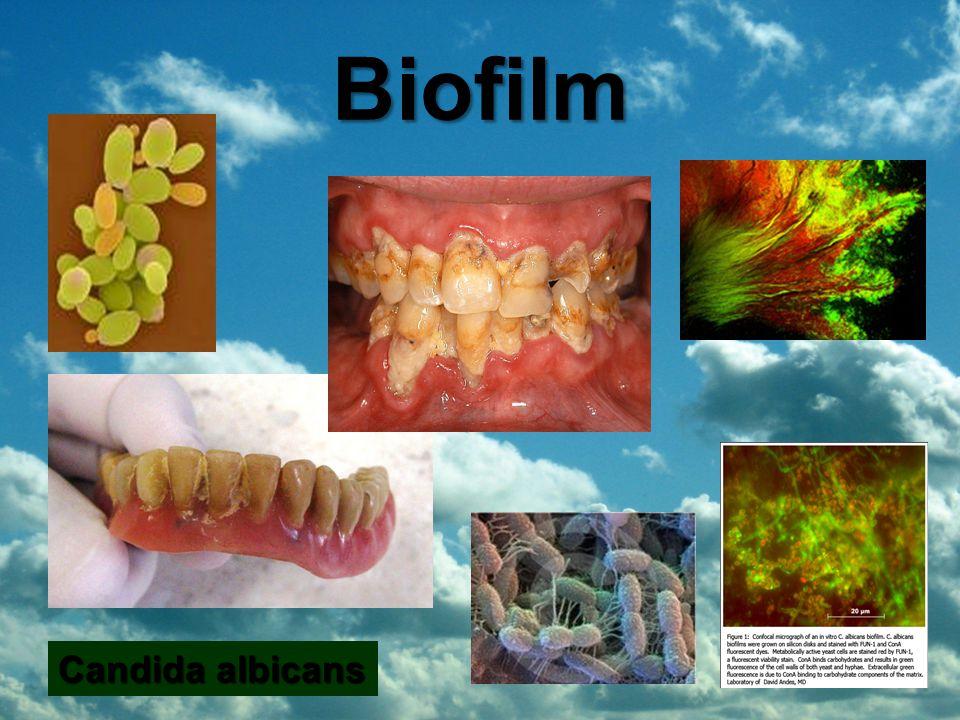 Candida albicans Biofilm