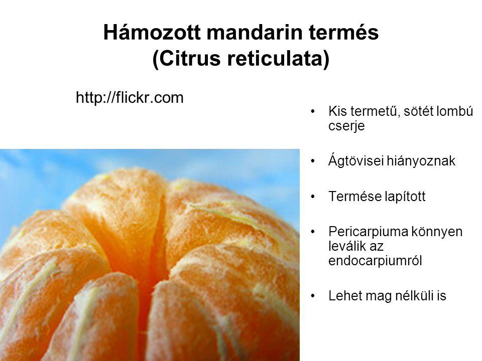 Hámozott mandarin termés (Citrus reticulata) http://flickr.com Kis termetű, sötét lombú cserje Ágtövisei hiányoznak Termése lapított Pericarpiuma könn